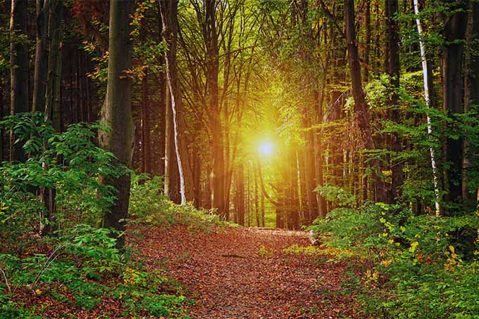 A lovely nature scene can inspire feelings of peace and reduce stress | GardenersPath.com