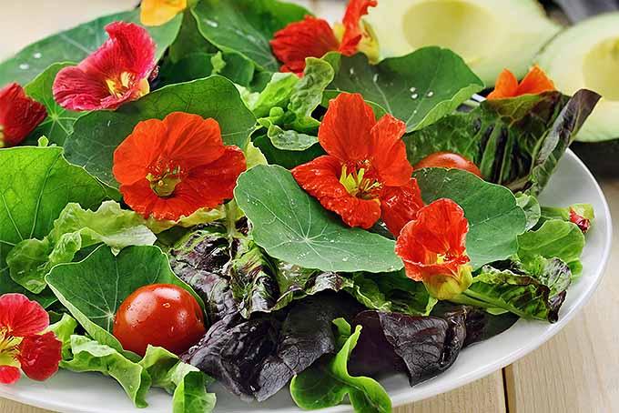 Add organic edible nasturtiums to a healthy salad. | GardenersPath.com