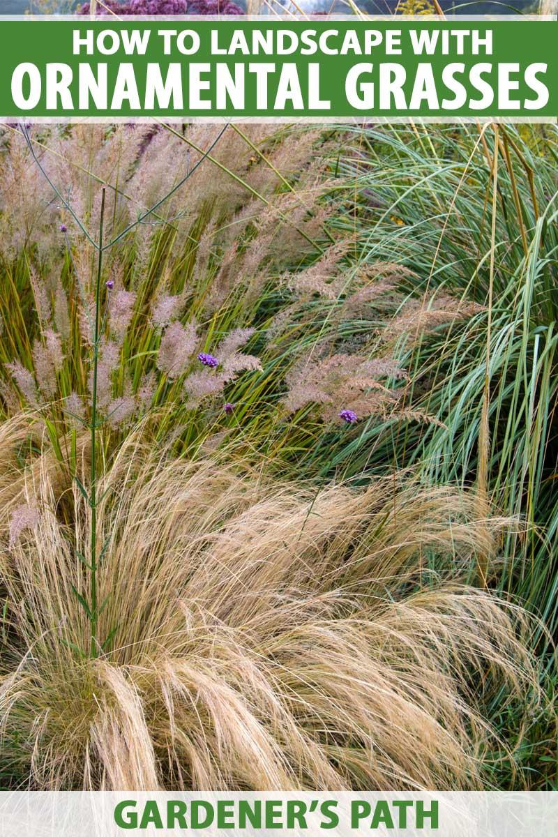 Ornamental grasses in garden border in autumn