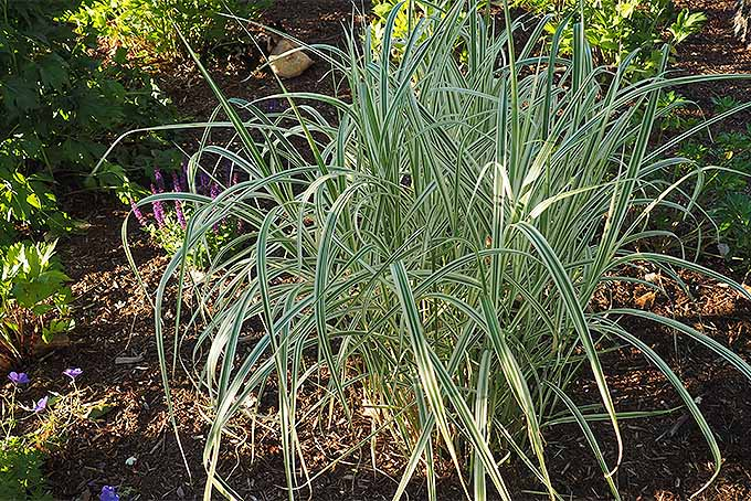 Creative landscaping with pampas, carex, and more. | GardenersPath.com