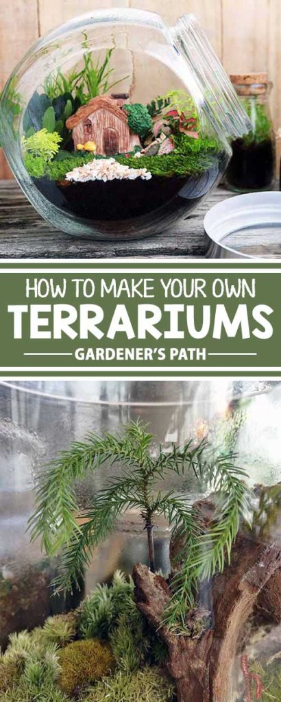 Would you like a miniature indoor garden that's virtually maintenance free? Let's make a terrarium! Turn an empty container into a lush, eye-catching display with plants like ferns, ivy, moss, and violets. Learn everything you need to make your own natural work of art, right here on Gardener's Path.