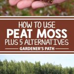 Peat moss has been a go-to soil amendment for gardeners for decades. More recently there has been some controversy as to its sustainability. Should gardeners use it? What alternatives are available? Find answers to these questions and more on Gardener's Path.