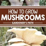 A collage of photos showing home grown mushrooms.
