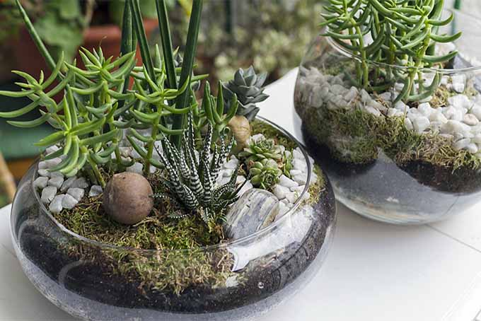 Terrariums are mini, glass-enclosed, indoor gardens that add interest and natural beauty to home decor | GardenersPath.com