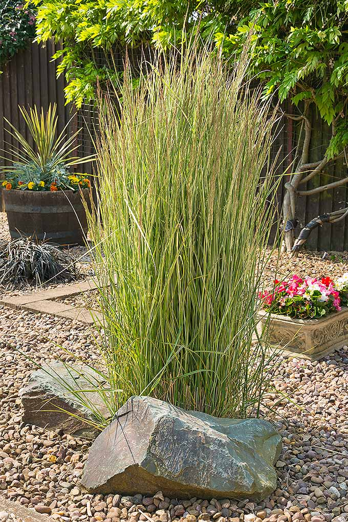 Easy landscaping with ornamental grasses gardener 39 s path for Long grass in garden