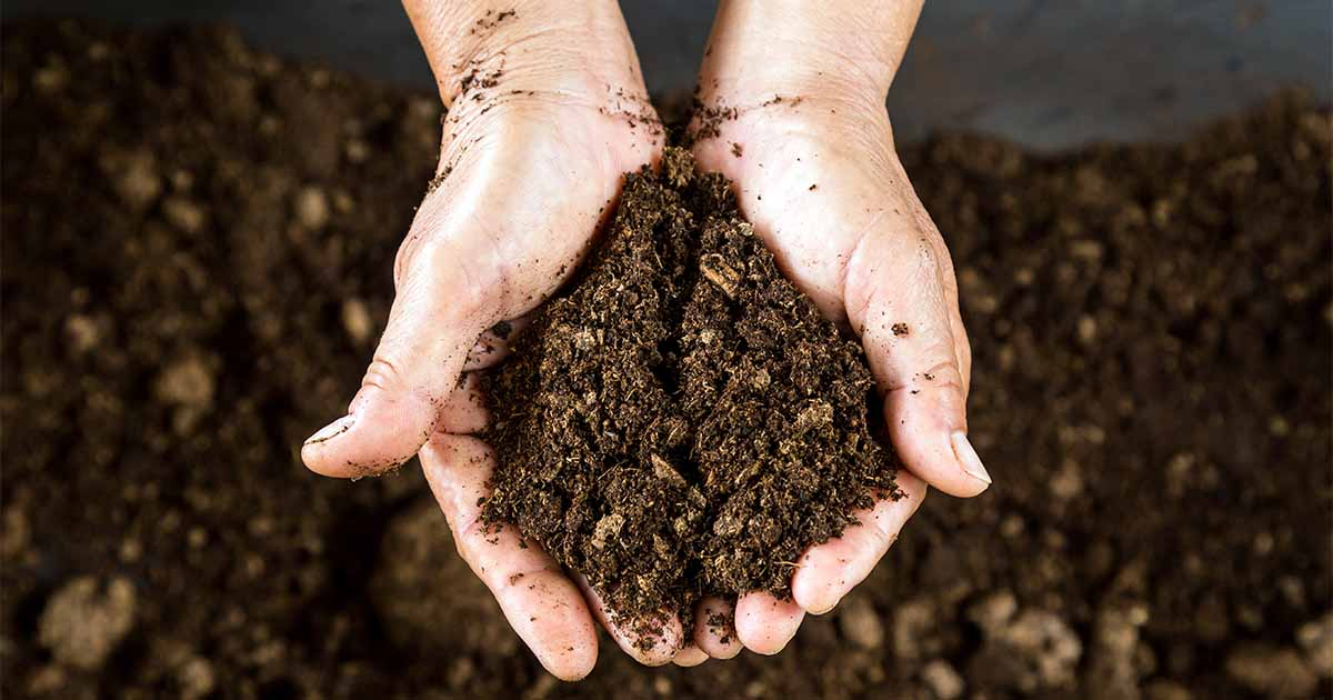 How to Use Peat Moss in the Garden   Gardener's Path
