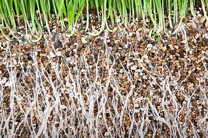 Choose peat moss or an alternative soil amendment to break up heavy soils | GardenersPath.com