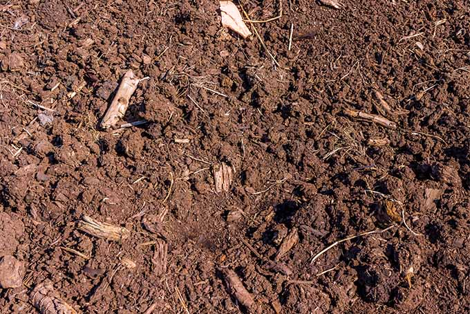 Learn the good and the bad about peat moss | GardenersPath.com