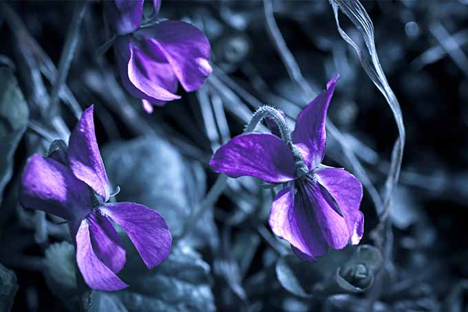 Encountering mysterious plants in the garden can lead to stress reduction | GardenersPath.com