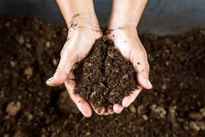 What Every Gardener Should Know about Peat Moss (Plus 5 Alternatives)