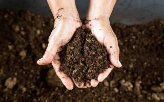 Peat moss can loosen up clumpy soil | GardenersPath.com