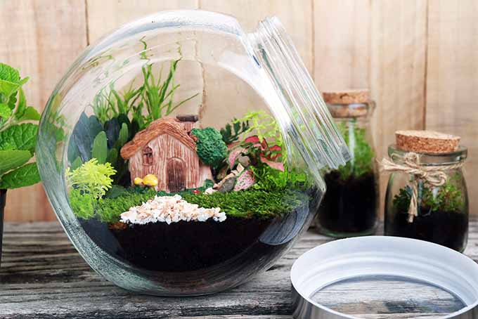 Building terrarium in glass containers can be quite rewarding | GardenersPath.com