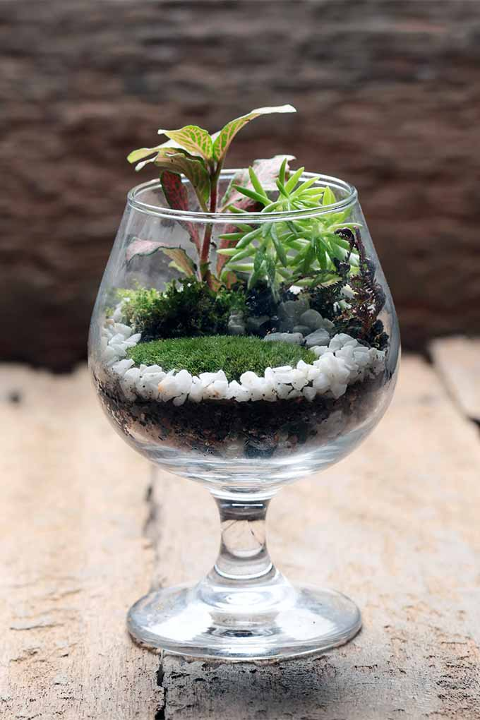 Get instructions and advice from our expert about creating a miniature landscape in a glass terrarium: https://gardenerspath.com/how-to/containers/terrariums-mini-landscapes/