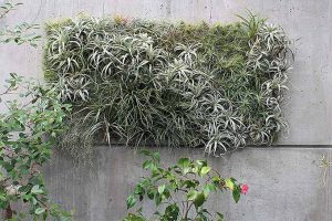 Grow Indoor Air Plants for Living Wall Art