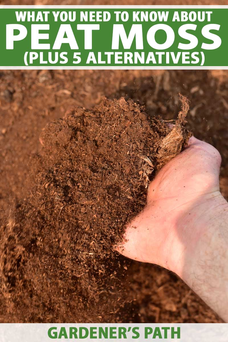 A human hand scoops up peat moss from a pile.