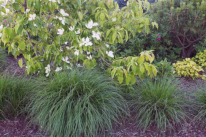 Why You Should Add Ornamental Grasses to the Landscape | GardenersPath.com