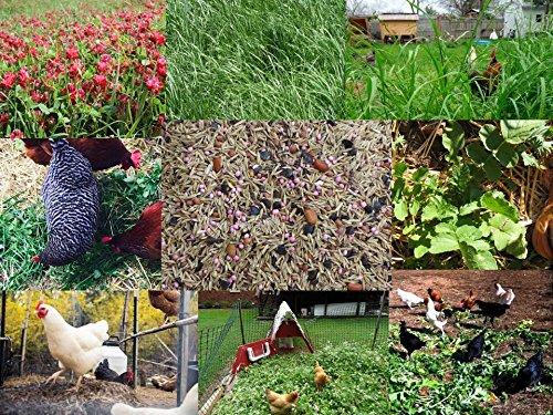 How to Grow Chicken Scratch Greens   Gardener's Path