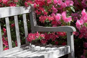 11 Best Benches for Enjoying a Fresh Garden View