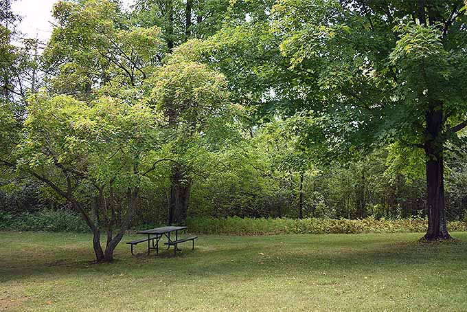 A few of our favorite shade trees | GardenersPath.com