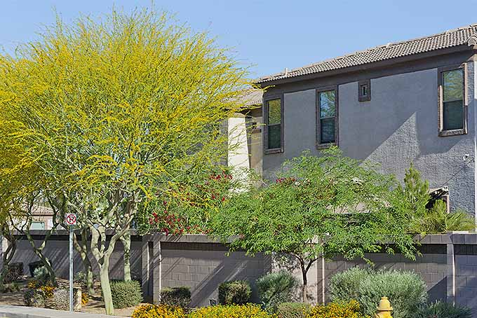 The Best Fast-Growing Shade Trees for Your Yard | Gardener's Path Houses Close To Safe Plant Trees on unknown plants, philadelphia plants, sahara plants,