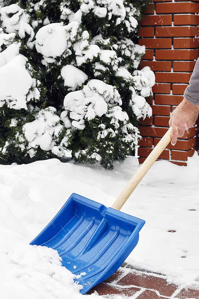 What's the key to painless snow removal? Our tips and reviews can help: https://gardenerspath.com/gear/tools-and-supplies/best-snow-shovels/