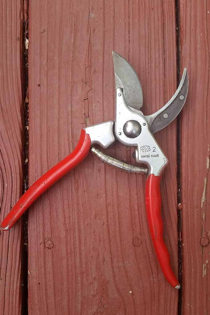 Looking for a new pair of garden pruners? Check out our review of the Felco F-2s: https://gardenerspath.com/gear/tools-and-supplies/felco-f-2-review/
