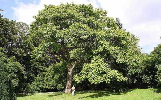 The Best Shade Trees that Grow Quickly | GardenersPath.com