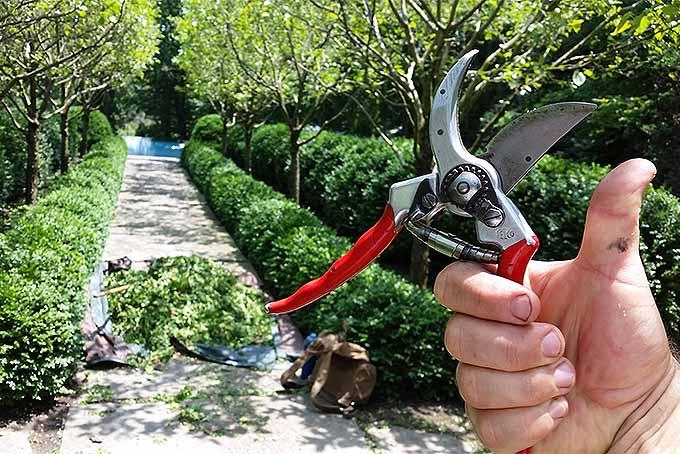 Thumbs up for these garden pruners. | GardenersPath.com
