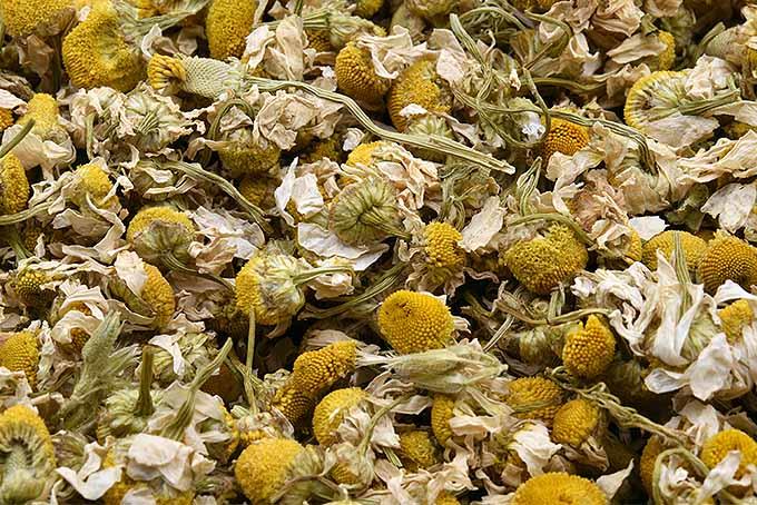 Dried chamomile flowers. | GardenersPath.com