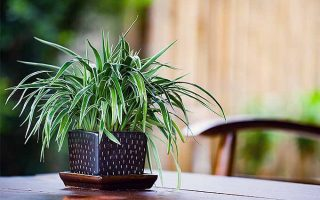 Houseplant Primer: A Guide to Basic Care and Durable Plants
