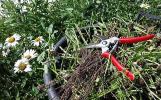 Your Guide to Fall and Spring Perennial Cutbacks and Pruning