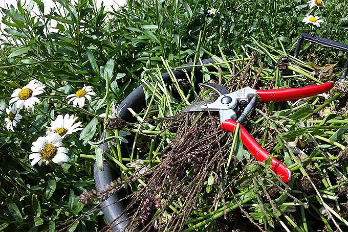 Expert Guide to Fall and Spring Perennial Cutbacks and Pruning | GardenersPath.com