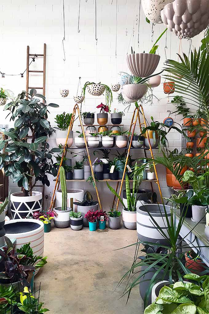 The Best Guide to Basic Care of Houseplants | Gardener's Path