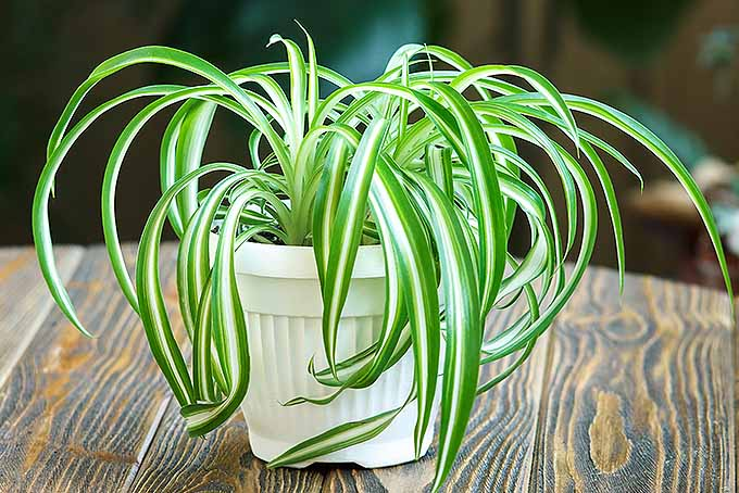 Houseplant Growing Guide for Black-Thumbed Gardeners | GardenersPath.com