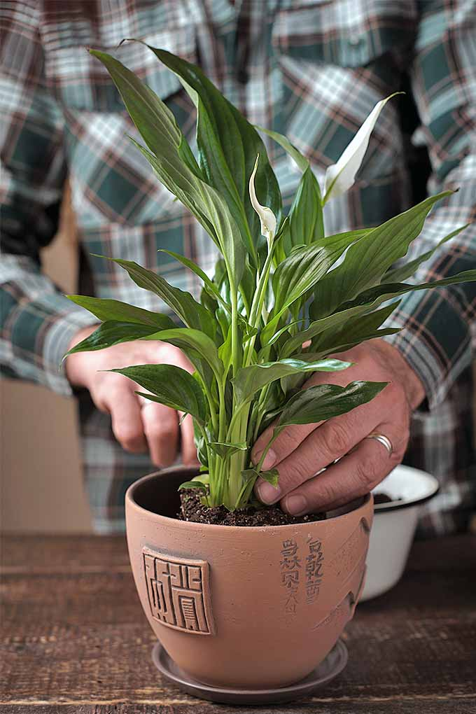 Bring the outside inside with potted houseplants that are durable and easy to care for, like the peace lily. Check out our list: https://gardenerspath.com/how-to/indoor-gardening/houseplant-care-primer/