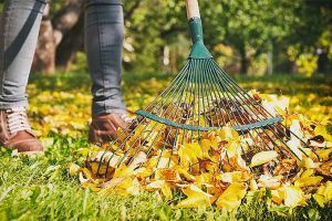 Make Raking Leaves a Breeze with the Right Tool: The Top 5 Leaf Rakes Reviewed