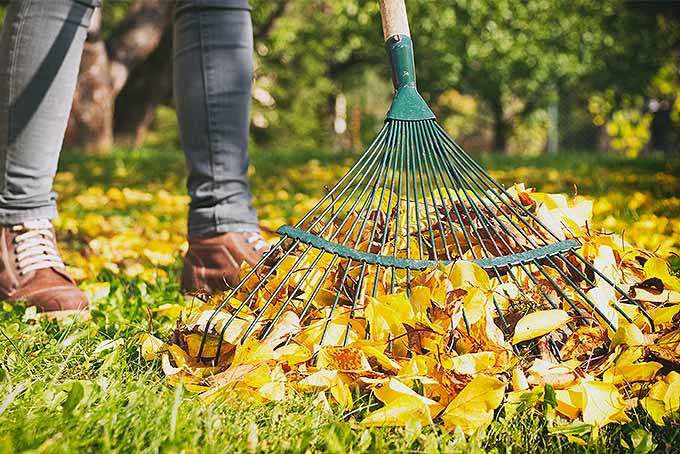 Review of the Best Leaf Rakes | GardenersPath.com