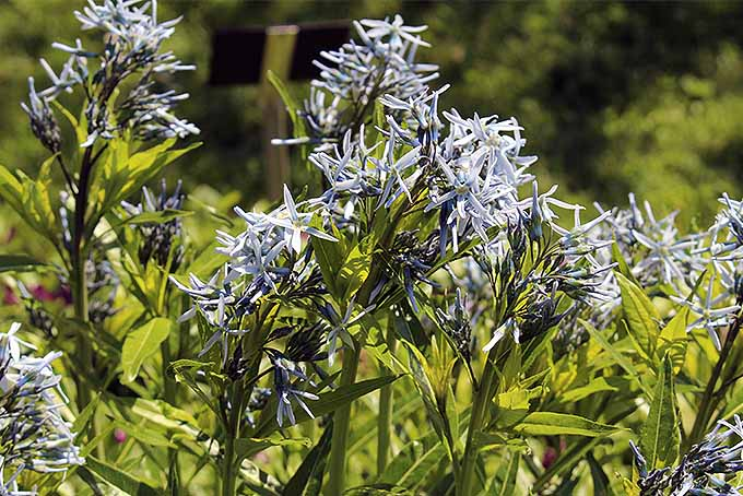 The Best Tips For Pruning Perennials In Spring And Fall Gardeners