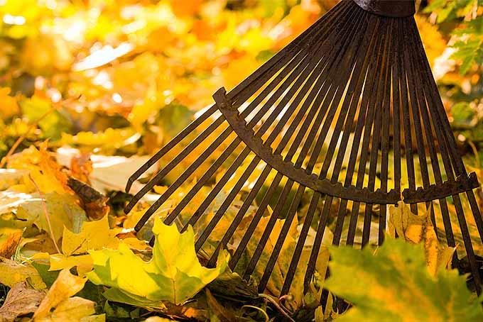 Top 5 Leaf Rakes | GardenersPath.com