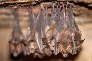 Bats Beat Bugs: Welcoming Bats Into the Garden