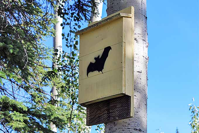 DIY bat house instructions | GardenersPath.com