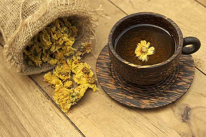 Chrysanthemum Tea from Dried Flowers | GardenersPath.com