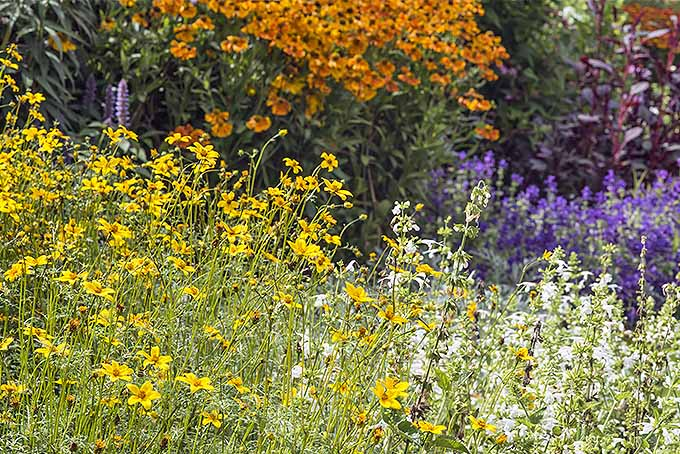 Flower Garden Tips: Pruning Perennials | GardenersPath.com