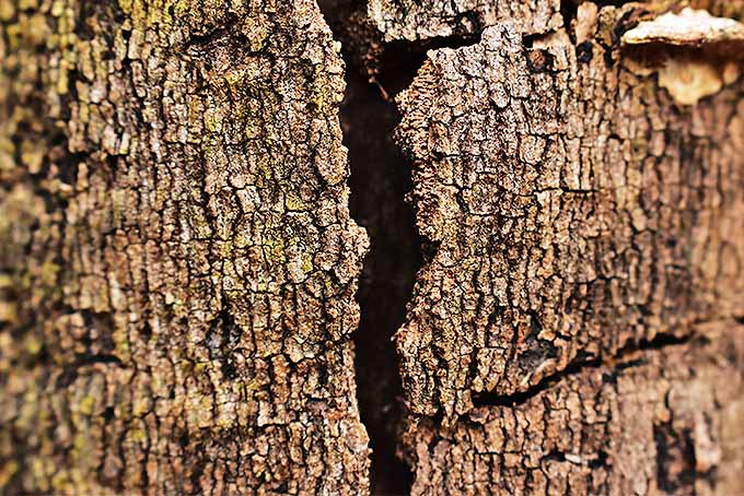 Loose bark and dead trees can create an attractive habitat for bats | GardenersPath.com