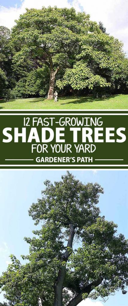A collage of photos showing different varieties of shade trees in residential settings.
