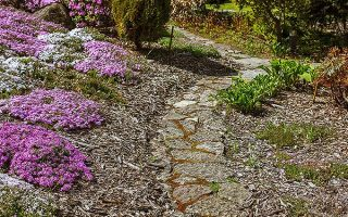 Phlox and hostas | GardenersPath.com