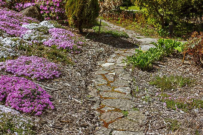 The 15 Best Flowering Ground Covers For Yard Gardener S Path