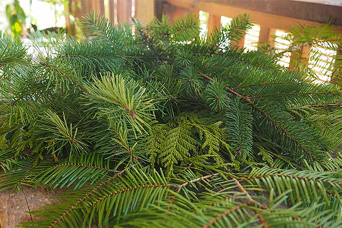 Add Depth to Your Christmas Swag with a Second Layer of Greenery | GardenersPath.com