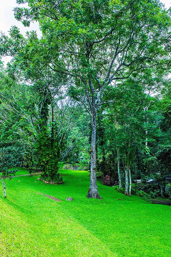 Do you have trees planted in a lawn? To preserve the health of your trees, there are steps you can take- and solutions for trees that are already suffering. Read more now or Pin It for later: https://gardenerspath.com/plants/landscape-trees/top-tree-dies/ #trees #treerescue #planthealth #gardening