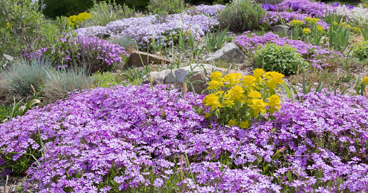Flowering Ground Covers For Yard, Ground Cover Flowering Plants